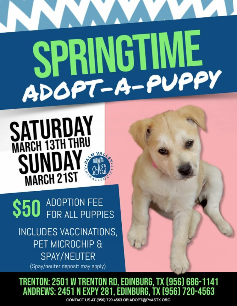 Flyer for adoption drive